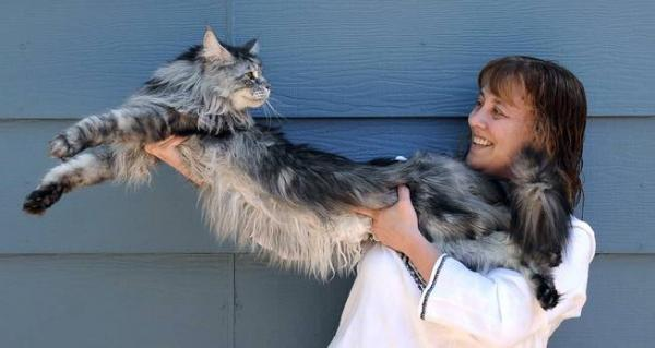 Il-gatto-più-lungo-del-mondo-Stewie,-è-morto-ieri.jpg